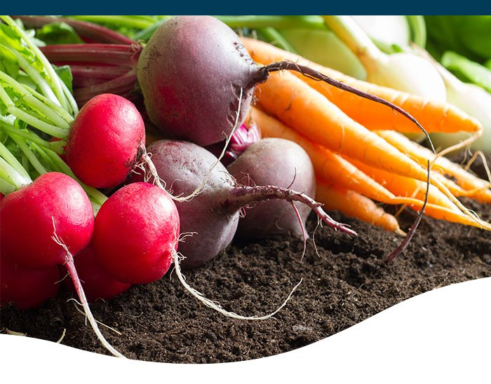 radish, beet, and carrots