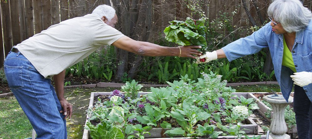 man and woman in the vegetable garden
