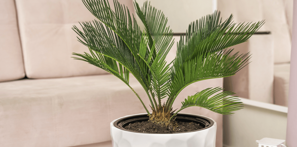 sago palm houseplant ted lare design & build