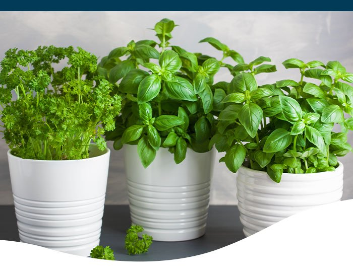 growing edible houseplants indoors