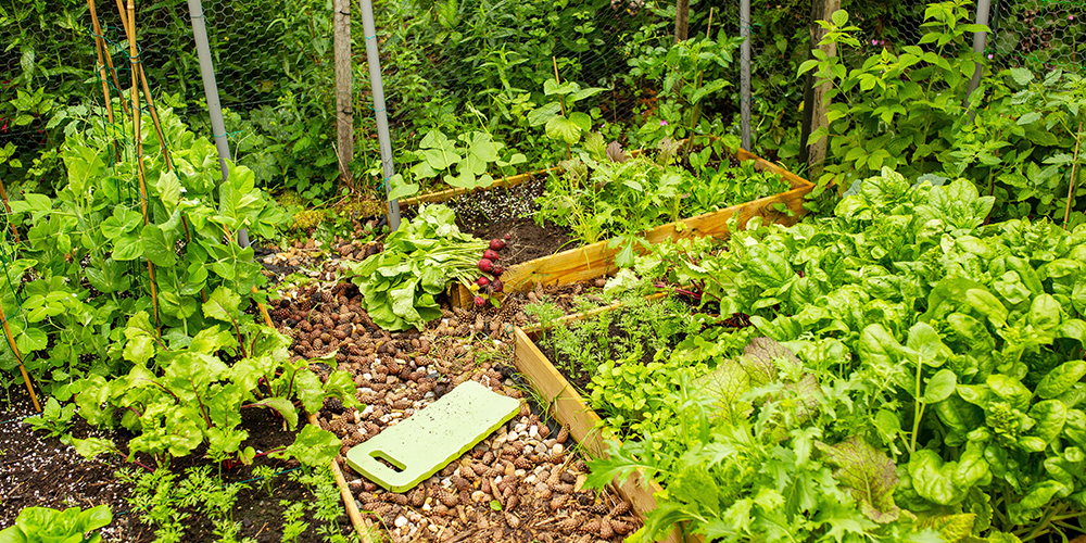 Advantages of Food Forests