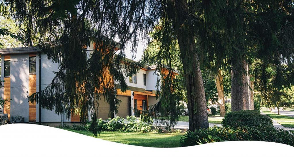 evergreen trees and shrubs ted lare design & build
