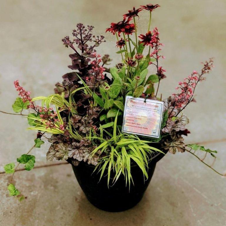 Fabulous Fall Perennial Planter 9/18/21 10am