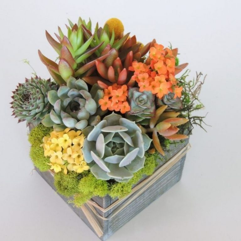 Fall Succulent Planter Workshop 10/16/21 10am