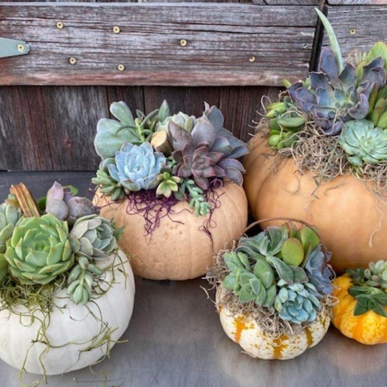 Drop in Succulent Pumpkin Workshop 10/2/21 11am-3pm