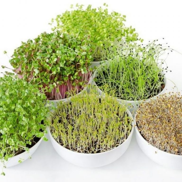 Microgreens & Sprouts Workshop 9/25/21 1pm