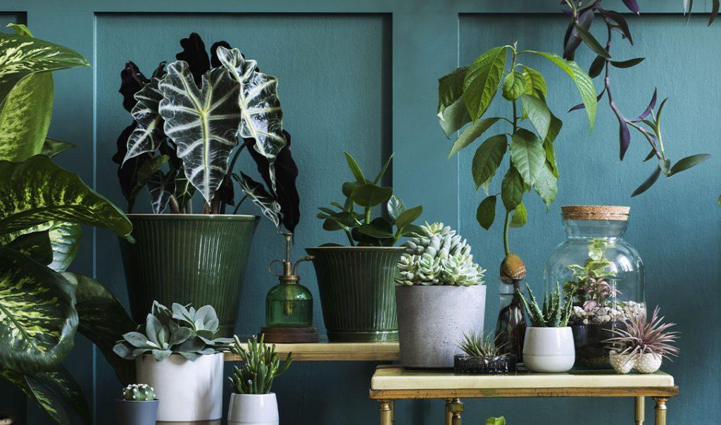 grouped houseplants