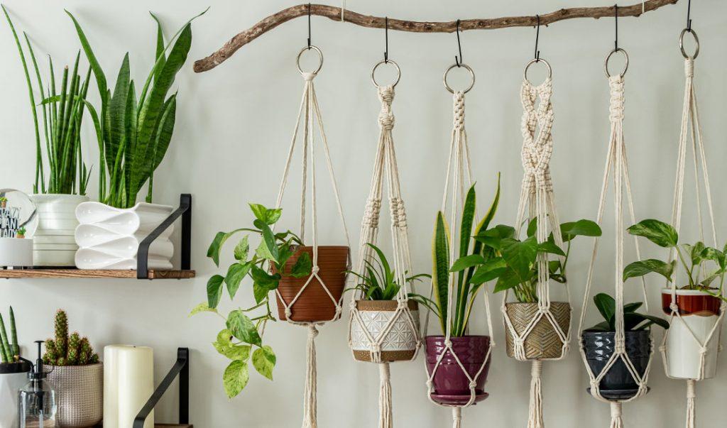 hanging macrame houseplants