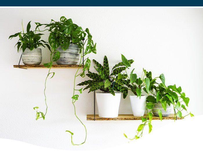 houseplants on shelf