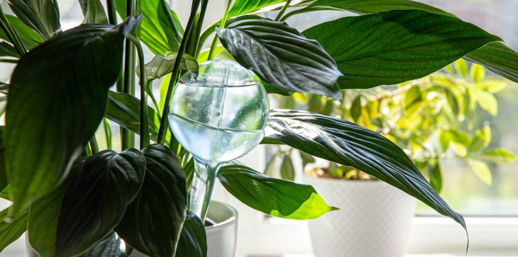 houseplant water globe