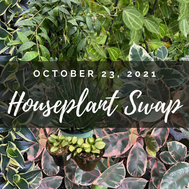 October 23, 2021 9am Houseplant Swap and a variety of rare and common houseplants in the background