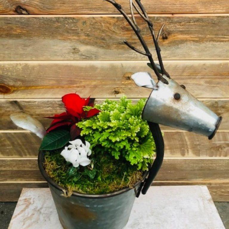 Reindeer Holiday Pot Workshop 11/21/21 12pm