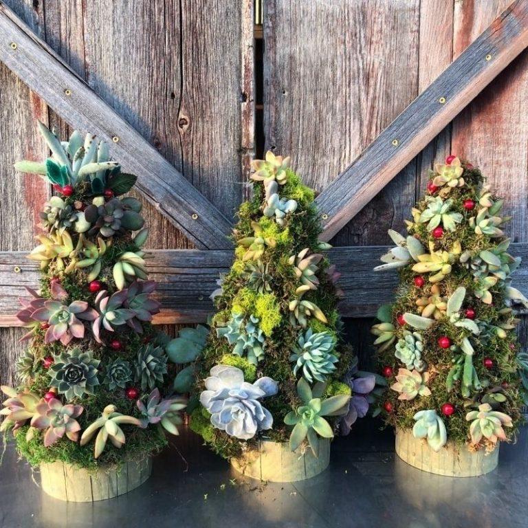 Succulent Christmas Tree Workshop 11/7/21 12pm