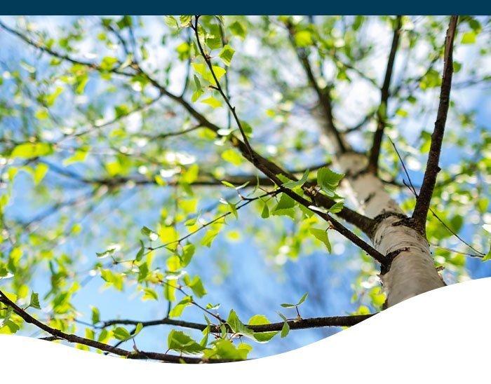 birch tree ted lare design & build