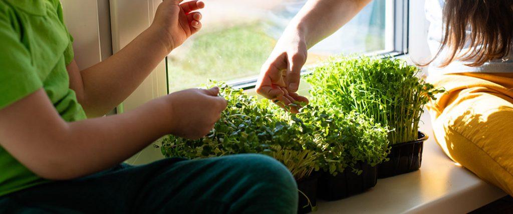 children picking microgreens ted lare design & build