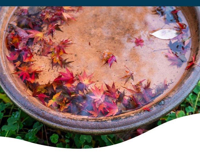 Ted Lare-winterizing fountain and birdbath-Birdbath in the fall